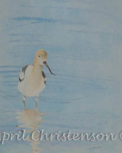 Avocet in colored pencil by April Christenson